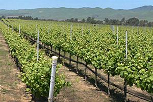 cottonwood winery